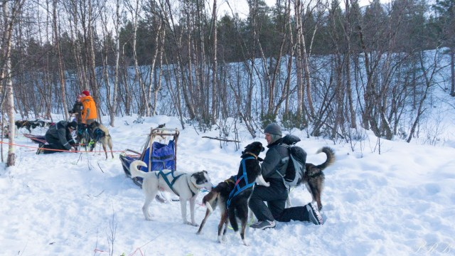 Trasti & Trine, dog sledding in Norway Outside This Small Town Alaskan Huskies