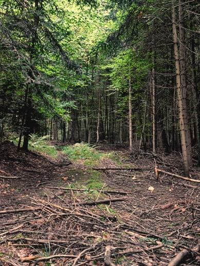 1_trail_woods_490