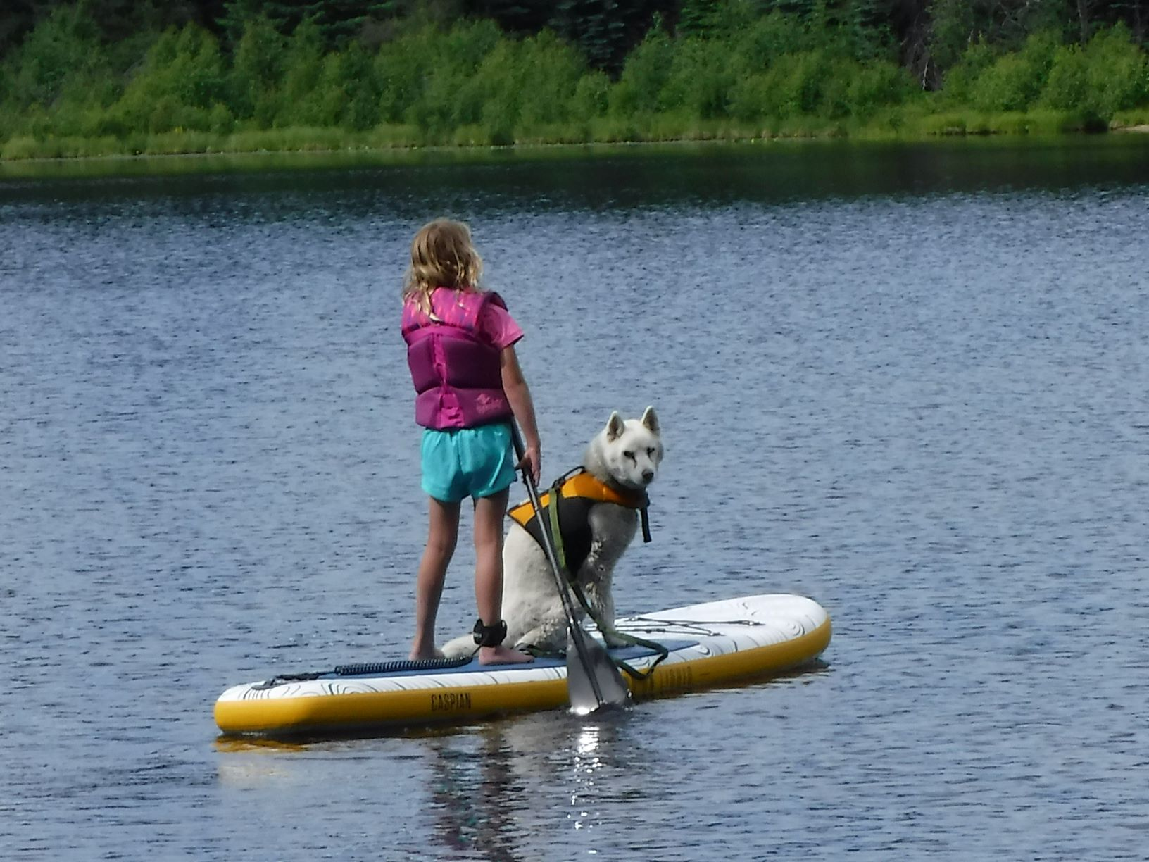 A little girl paddle-boarding with her dog on a lake.