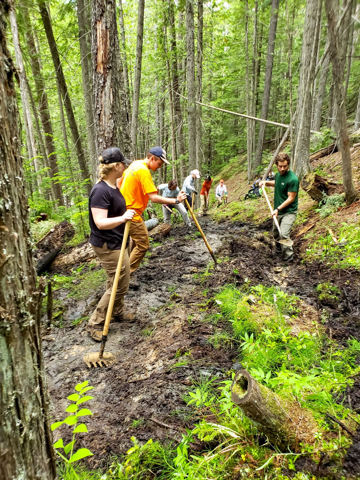 Volunteers, wearing jeans, t-shirts, ball caps, and work gloves, use pulaskis to work on creating hiking trails.