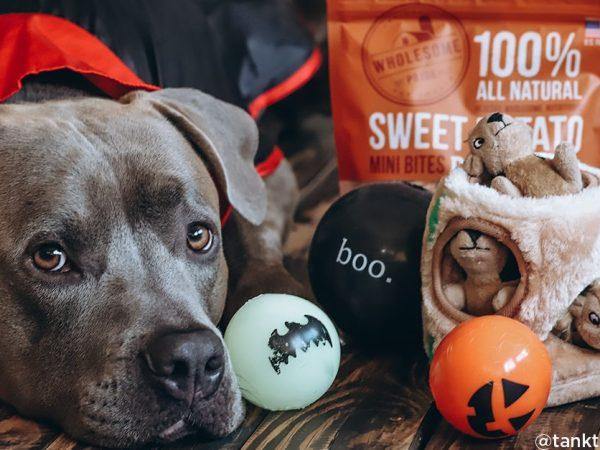 dog with sweet potato treats