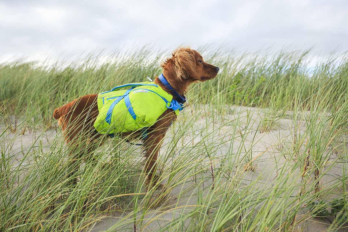 crest stone explore dog hiking pack