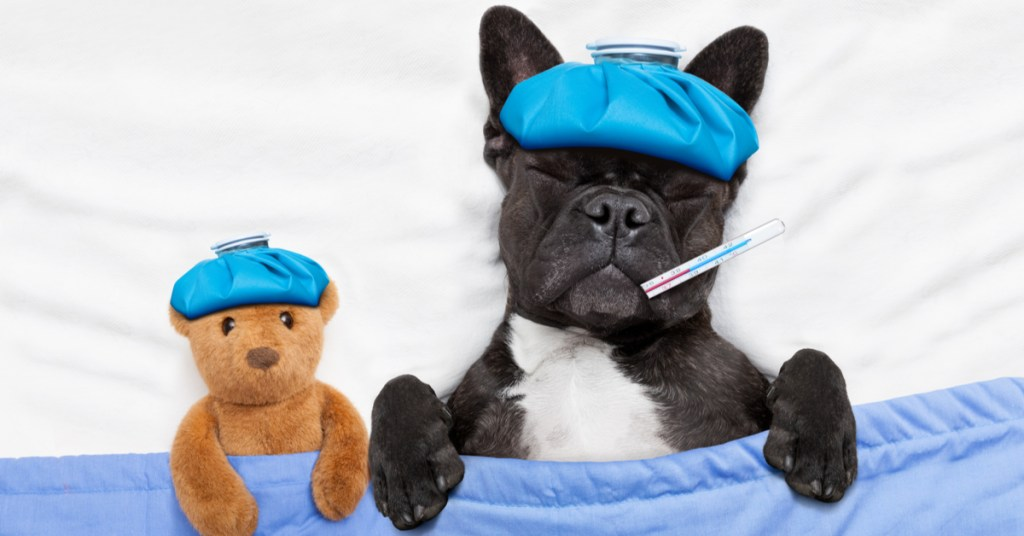 is human medicine safe for dogs