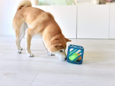interactive dog toy puzzle cube