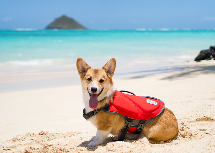 Things To Do With Your Dog in The Summer