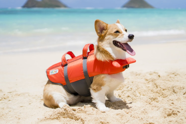 Dog at the beach wearing Outward Hound Granby vest