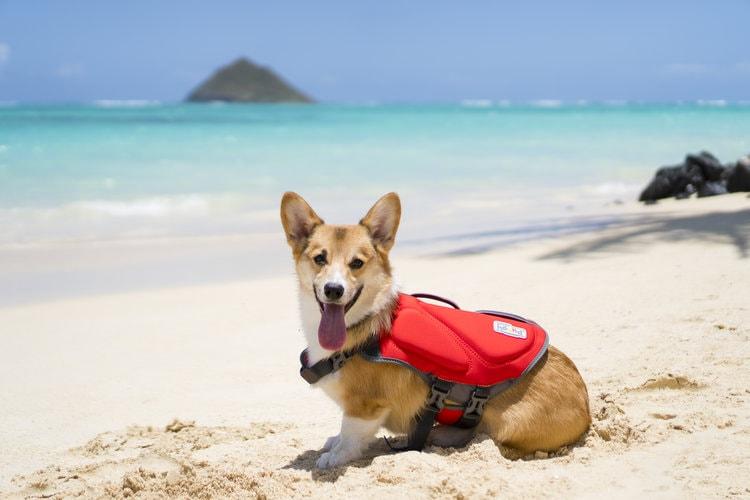 Dog at the beach wearing Outward Hound Dawson Dog Life vest