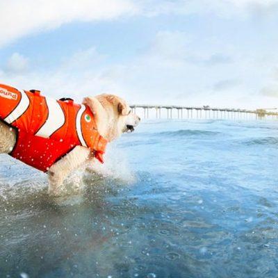 dog-wearing-a-lifejacket dog life jacket