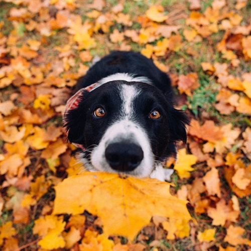 dogs ready for fall