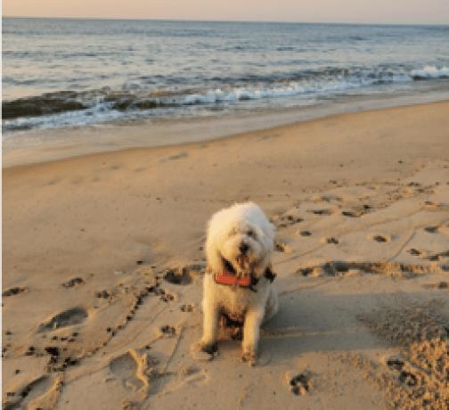 SMALL WHITE DOG WEARING ORANGE LIFE JACKET ON THE BEACH