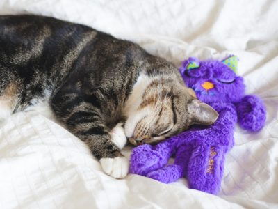 cat toys gift guide kitty cuddling with cat toy