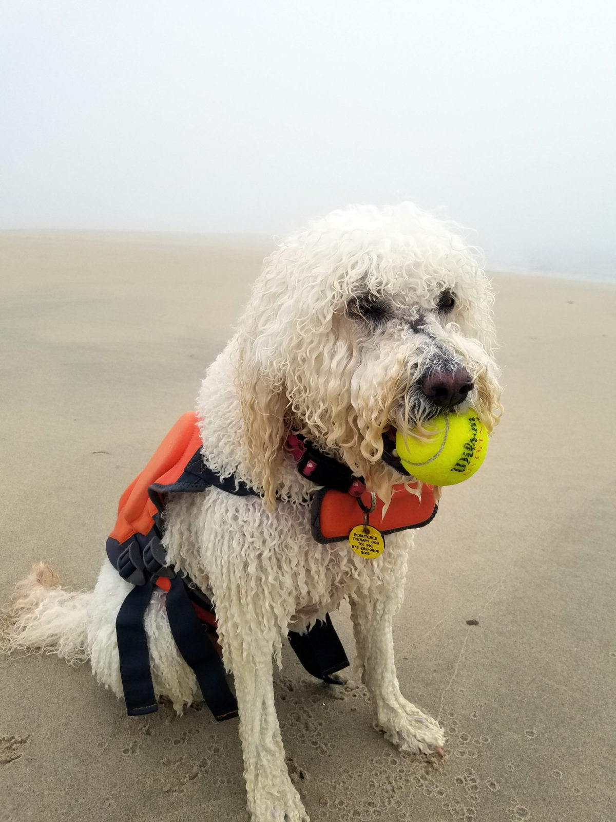 opal the dog wearing outward hound granby life jacket