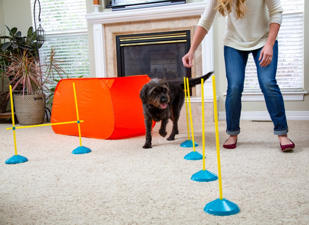 indoor agility give your dog more exercise