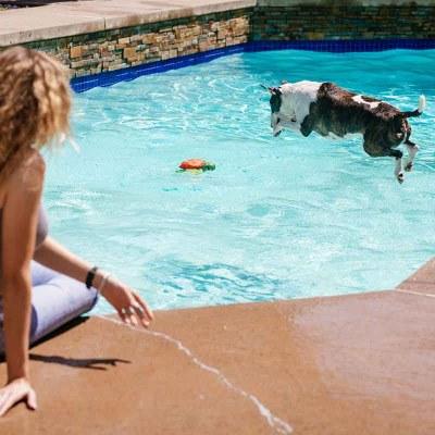 dog pool toys