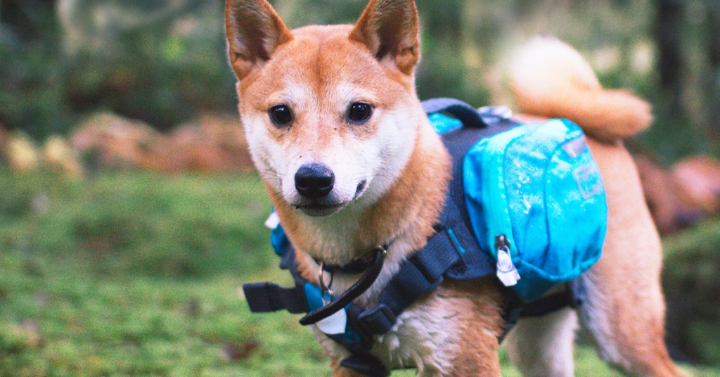 dog-backpack-summer-activity-with-your-dog