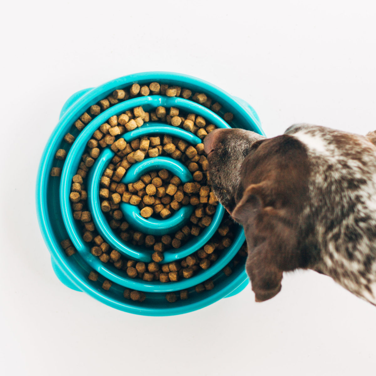 Fun Feeders are great to bring with you on a road trip with a dog hiccups