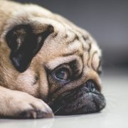 signs of stress in dogs