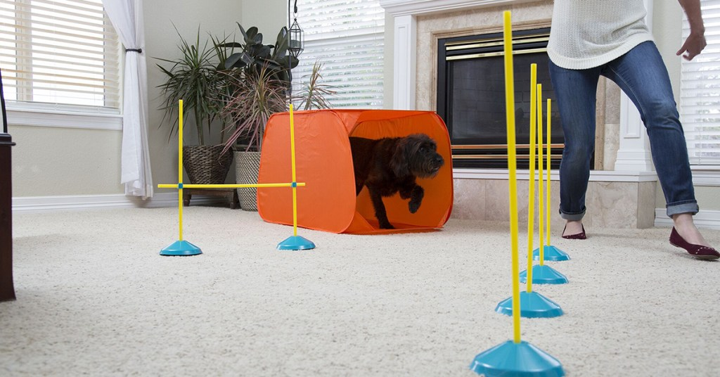 the Zip Zoom Indoor Agility Kit can help soothe stress in pets