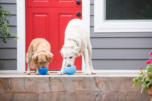 high-value-dog-treats-in-toys
