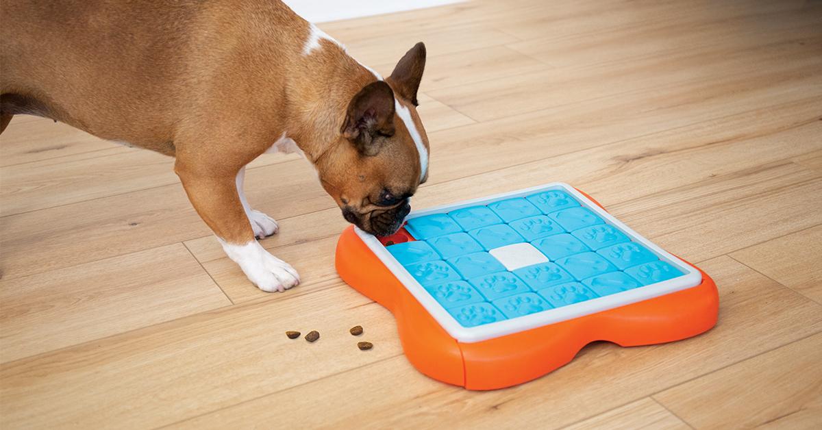 challenge slider interactive dog game