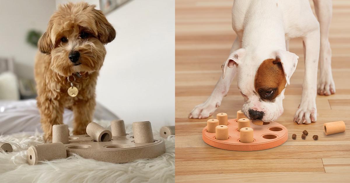 dog-smart-composite