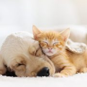 cat and dog snuggling