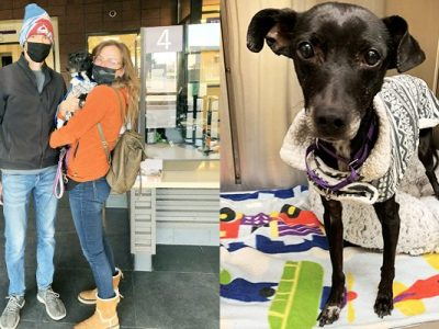 Two adults pose with their rescued Whippet on the left. On the right is another image of the rescued dog.
