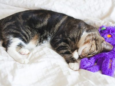 first time cat owner tips cat wont sleep at night