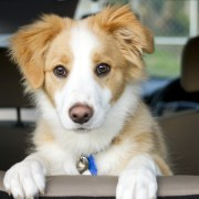 what to keep in your car for your dog