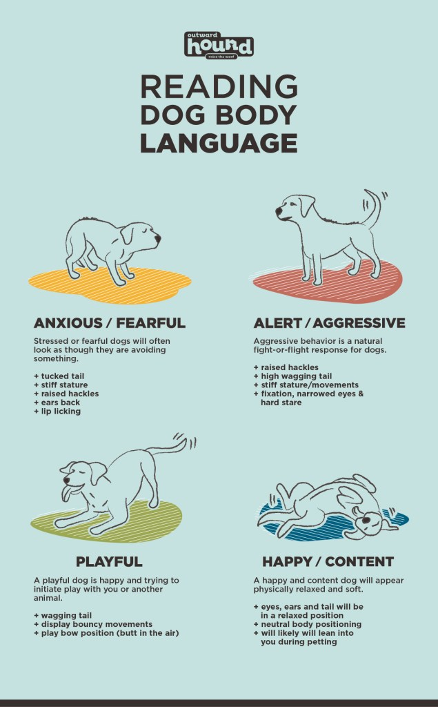 how to read dog body language infographic