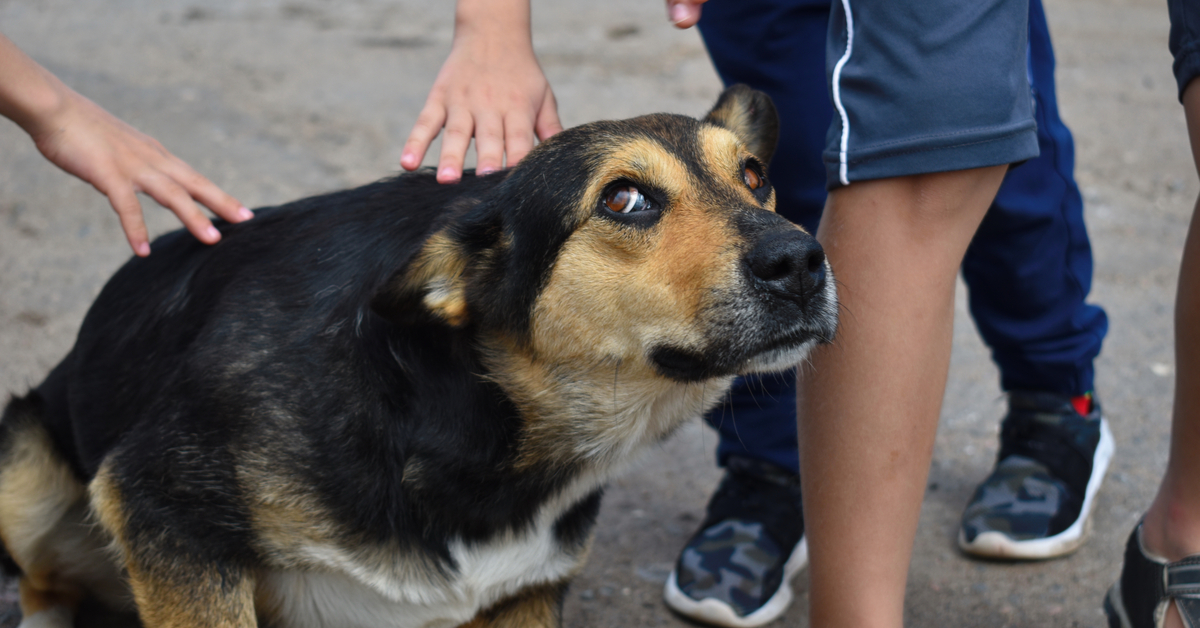 scared dog fearful of children around him