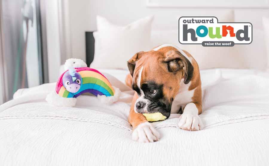 hide a rainbow best dog toys for boredom