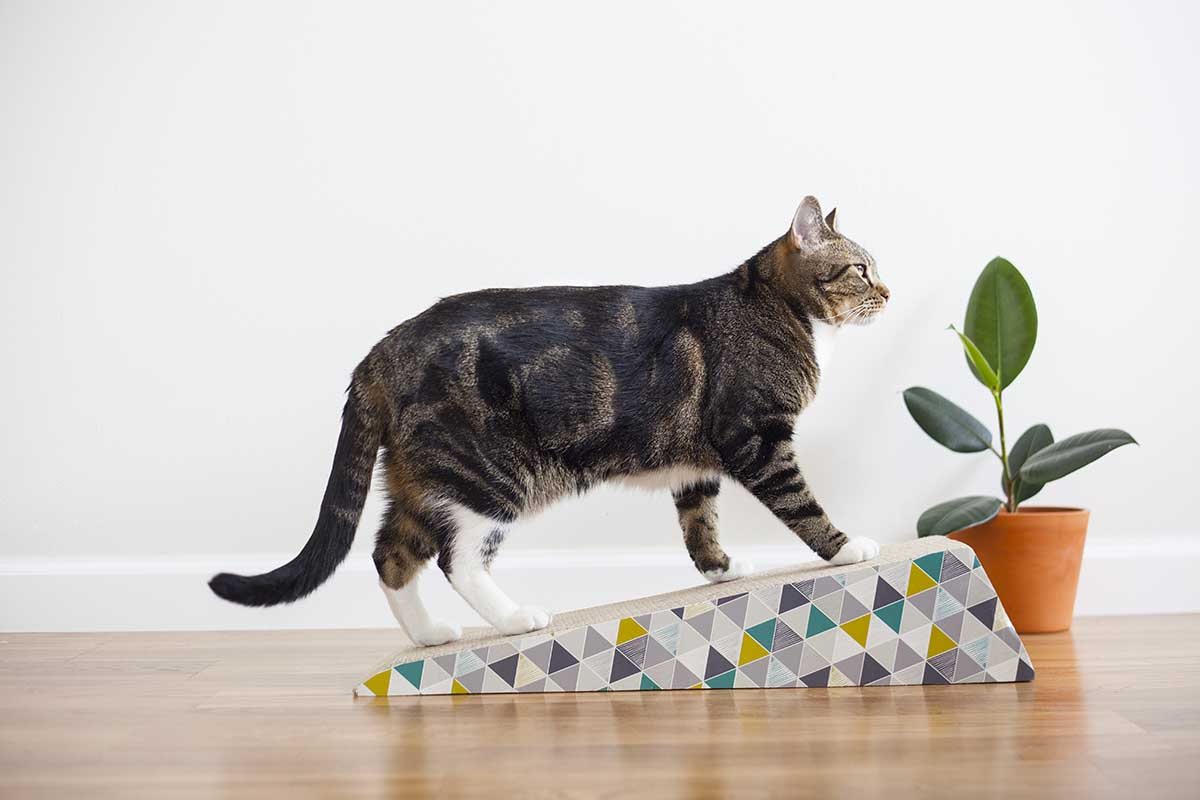 pet safe essential oils for diffuser