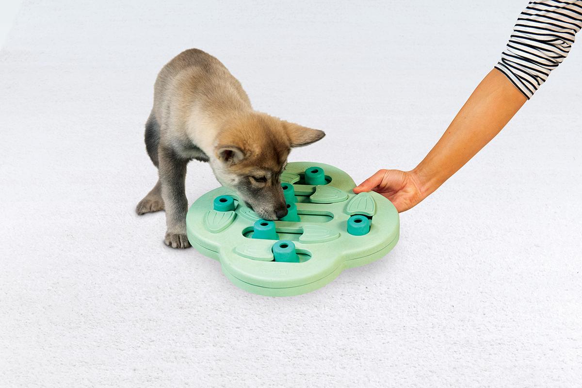 puppy hide n slide mental stimulation for dogs