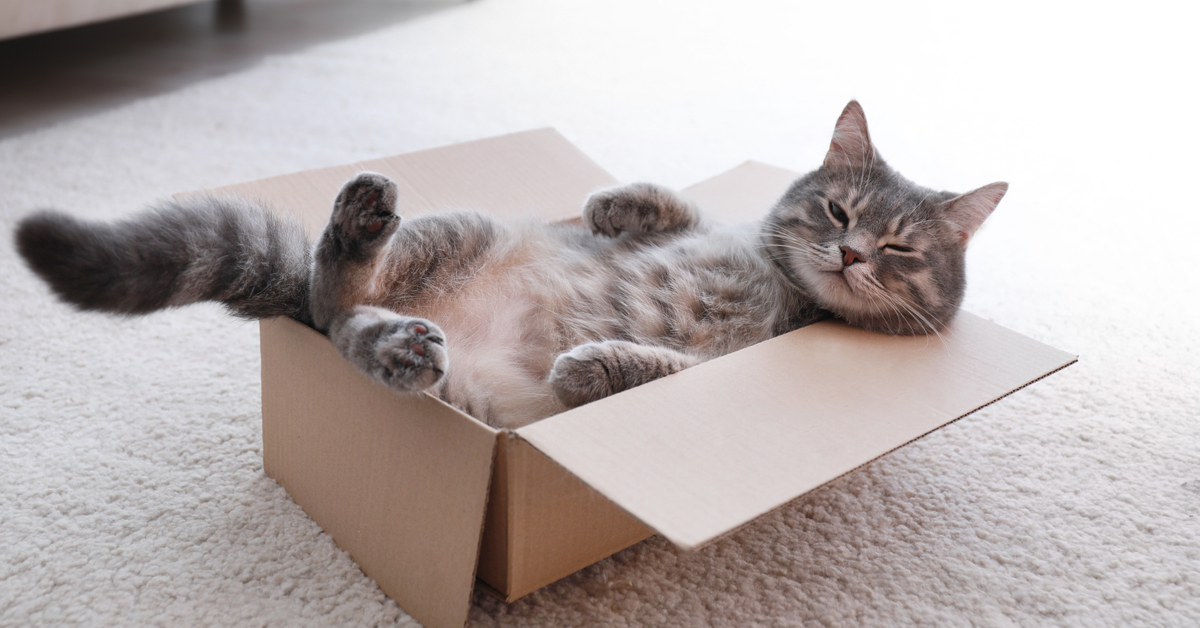 cat lounging in a box