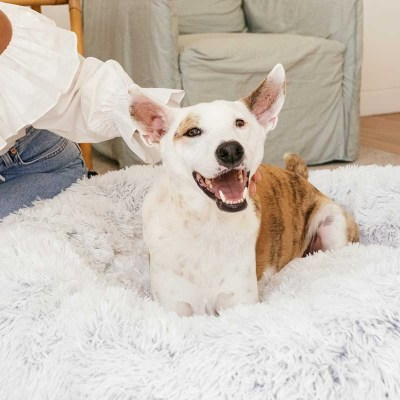 get well gifts for dogs dog in calming dog bed