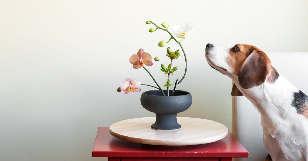 dog smelling an orchid