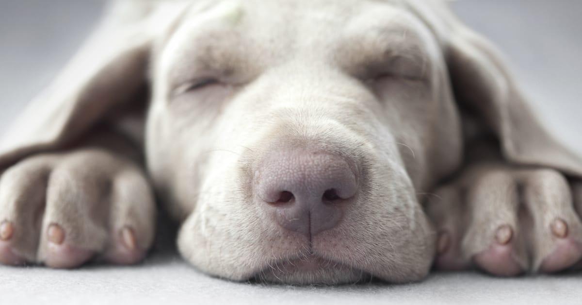 waking a deaf dog