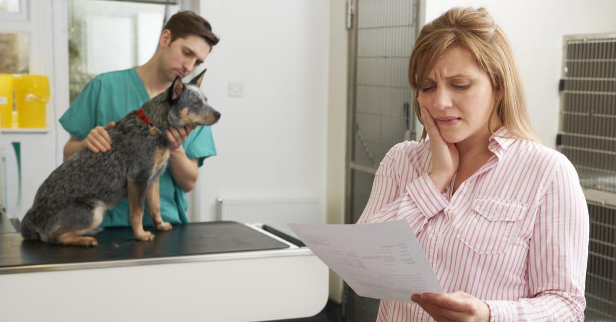 help with vet bills