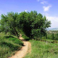 Chemin à travers les arbres
