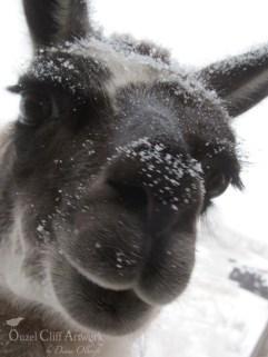 "Mari "" Feed Me It's Snowing"""