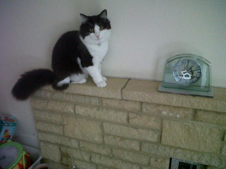 Hickory Dickory Dock ...... I'm sure someone said something about a mouse ????