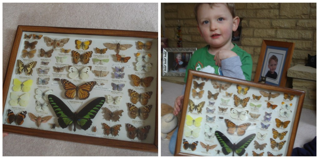 Monkey and our Mini Beasts collection