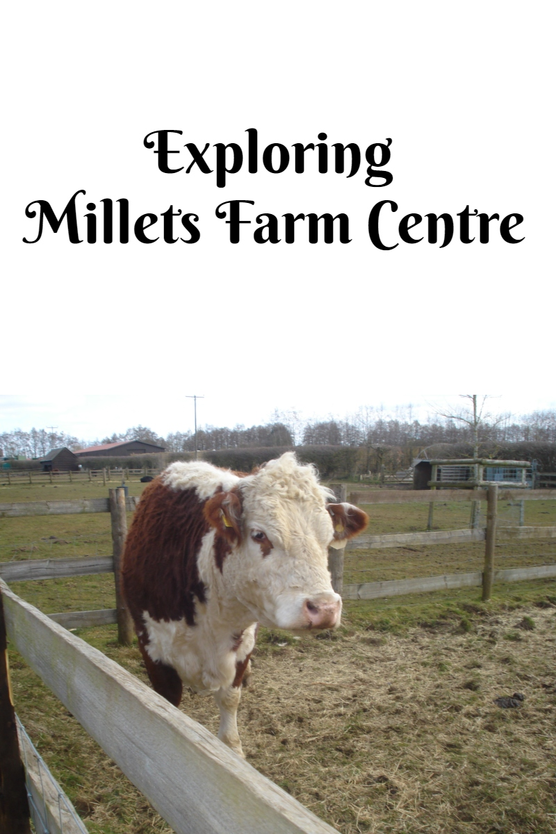 Exploring Millets Farm Centre
