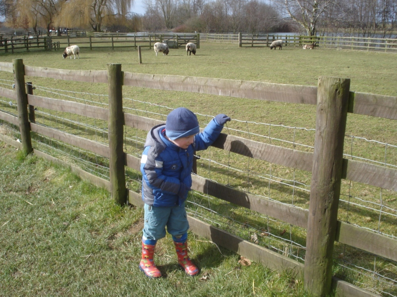 A day out in the ..... SUNSHINE - Millets Farm Centre