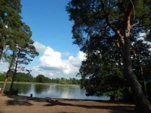 Frensham Ponds