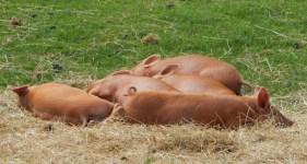 Cotswold Farm Park with friends