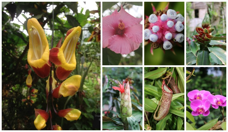 Rainforest Biome Blooms