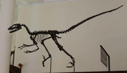 Dinosaur hunting in Cambridge