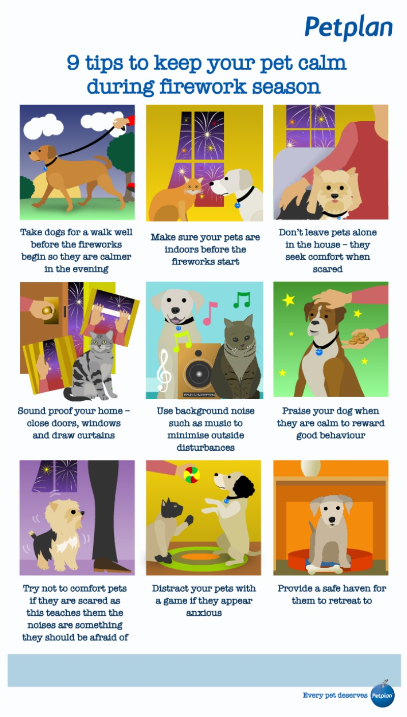 Protecting your pet on Bonfire Night